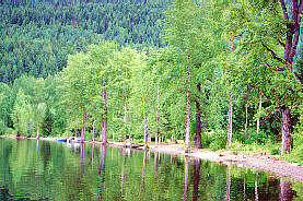 Wells Gray Provincial Park Bc Bc Provincial Parks Wells