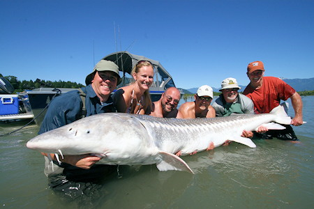 Bc sport fishing group harrison hot springs bc guided for Sturgeon fishing michigan